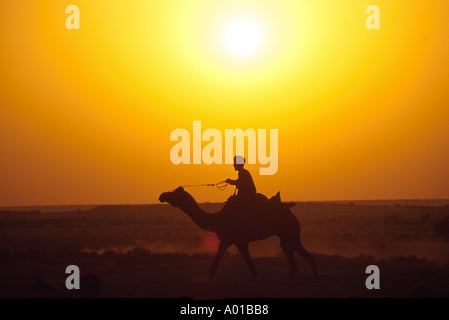 Camel Rider at Sunset, Pushkar, Thar Desert, Rajasthan, India - Stock Image