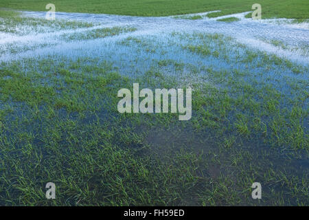 A farmers field flooded with water - Stock Image