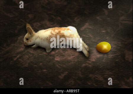 A rabbit hops away after laying a golden egg - Stock Image