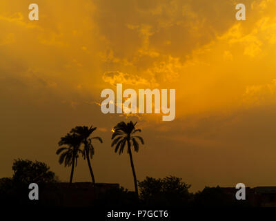 Sunset against palm trees on the river Nile Egypt in an industrial area with pollution increasing the dramatic orange colours in the clouds - Stock Image
