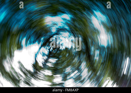 Abstract of trees, colour - Stock Image