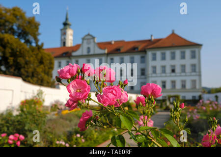Germany, Bavaria, Schaeftlarn Abbey, Praelatengarten, blooming roses - Stock Image