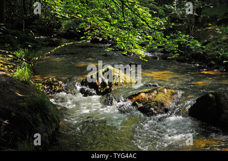 Cascade on the Fowey river at the Golitha Falls as it passes through the ancient Oak woodlands in Cornwall.UK - Stock Image