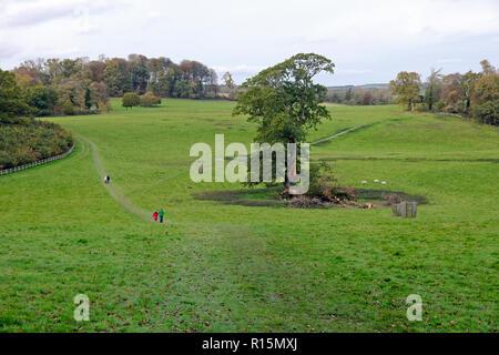 Visitors walking in Dinefwr Park landscape in autumn November Llandeilo Carmarthenshire Wales UK  KATHY DEWITT - Stock Image