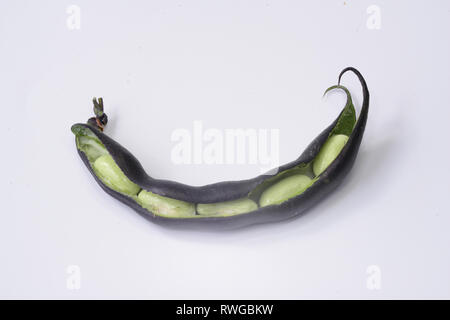 Green Bean (Phaseolus vulgaris). Opened fresh bean pod of a purple variety with unripe seeds. Studio picture against a white background - Stock Image