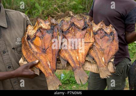 Selling Fish, Smoked Tilapia, (Ngege), Roadside, Street Vendor, Vendors, Uganda - Stock Image