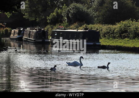 Evening on the canal. A strong evening sun makes for a bit of a monochromatic image of canal boats and wildfowl on the T and M canal near Handsacre. - Stock Image