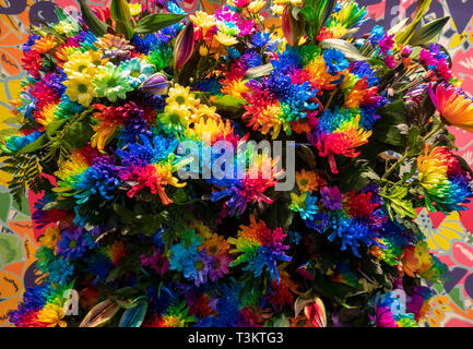 Artificially colored Rainbow Chrysanthemums; Rainbow Flowers or Happy Flowers. - Stock Image