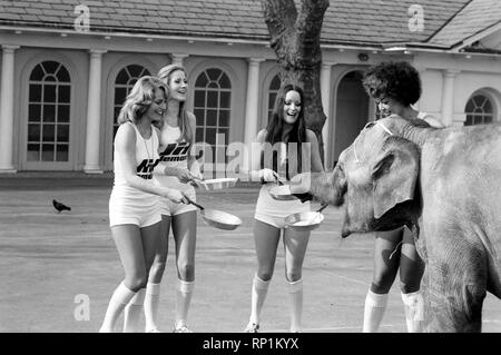 Strange tales of London. Beauty Queens (who will be in the pancake race on Tuesday) and baby elephant Minoti - she is five, but for an elephant that is a baby. February 1975 75-00776-013 - Stock Image