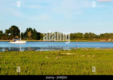 Wareham, Dorset, UK. 14th July, 2017. Arne nature, reserve. Poole harbour and Wareham on a warm and sunny evening. - Stock Image