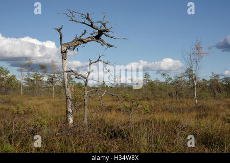 Soomaa National Park. Riisa Bog, Pärnu County, Estonia, Europe - Stock Image