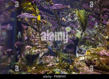 Fish exhibit, Alaska SeaLife Center, Seward, Alaska. - Stock Image