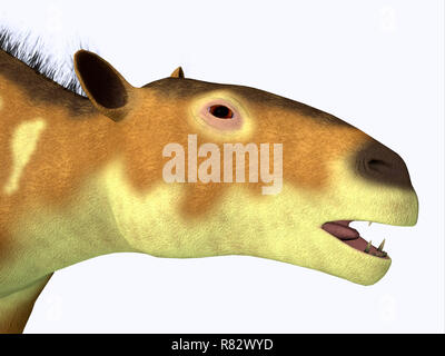 Eurohippus Horse Head - Eurohippus was an early horse that lived in the Middle Eocene Period of Europe and Asia. - Stock Image