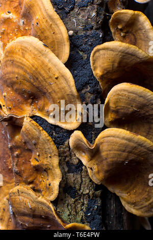 mushrooms closeup in Colombia - Stock Image