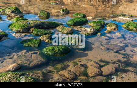 Green algae on the rocks at the edge of the sea on a sunny autumn day - Stock Image