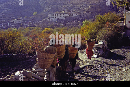 Women using head bands to carry baskets of apples into Marpha in Kali Gandaki valley on Annapurna circuit Himalayas - Stock Image