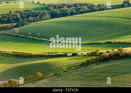 Spring afternoon in South Downs National Park, West Sussex, England. - Stock Image