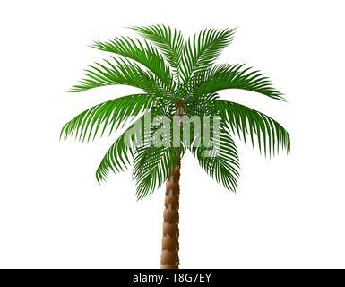 Tropical lush dark green palm tree. illustration - Stock Image