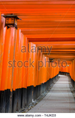Senbon Torii, vermilion red-orange color is associated with the soul of Inari Okami and blessings for life, the earth and production, the tori gates a - Stock Image
