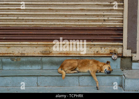 Poverty in Chennai, India, where a dog sleeps outside a closed shop - Stock Image