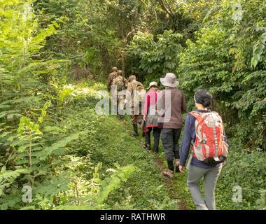 rangers leading tourists on gorilla trek, Bwindi Impenetrable Forest, Bwindi, Uganda, Africa - Stock Image