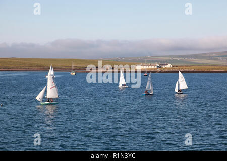 Dinghies from Stromness Sailing Club, Orkney, racing in the harbour with Inner Holm in the background - Stock Image