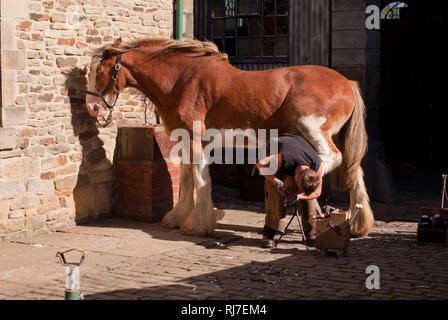 Blacksmith at work shoeing a horse, Beamish Museum, County Durham, UK - Stock Image
