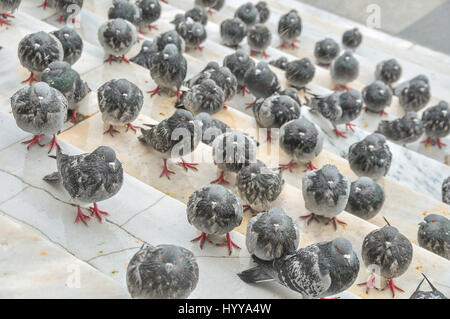 Pigeons sit in a cold winter rain on the steps of the New Mosque in Istanbul. - Stock Image
