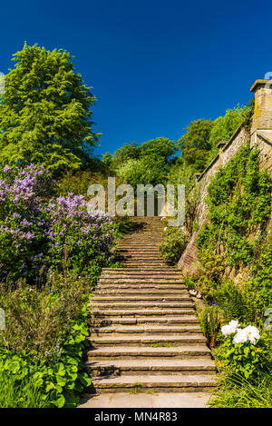 Deserted steps and blue skies at Chartwell, Kent, UK - Stock Image