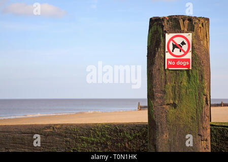 A No Dogs sign on a breakwater on a North Norfolk beach at Bacton-on-Sea, Norfolk, England, United Kingdom, Europe. - Stock Image