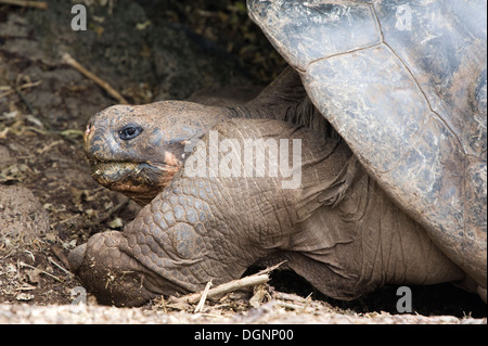 Galapagos islands island South America Ecuador travel tourism - Stock Image