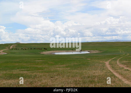 A herd of horses leaving a drinking place on the steppe of Khovsgpl Province, Mongolia. - Stock Image