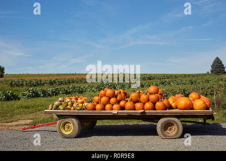 A trailer load of pumpkins. Pennsylvania Dutch Country, , Lancaster County, Pennsylvania, USA, - Stock Image