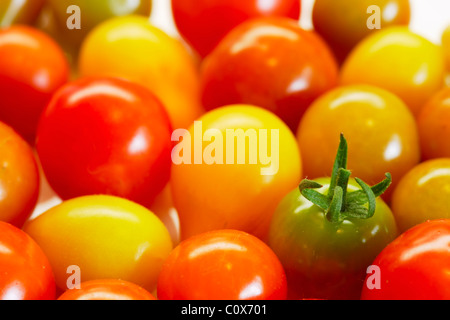 Jewels: colourful cherry tomatoes fresh picked organic from the back garden - Stock Image