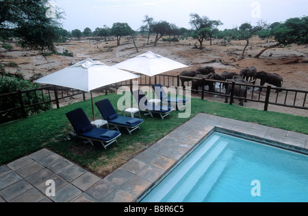 Elephants near the pool at Savuti Elephant camp - Stock Image