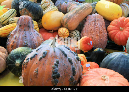Stack of pumpkins - Stock Image
