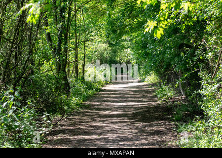 Footpath through woodland - Stock Image
