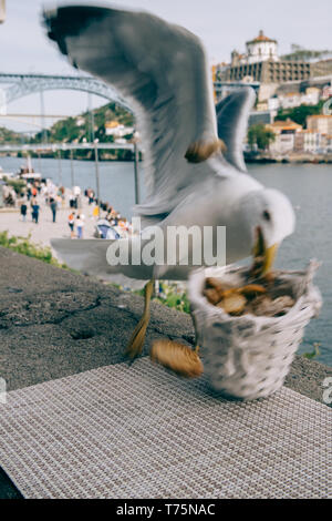 Spontenous candid shot of a seagull in Cais Ribeira, Porto, Portugal stealing bread from a basket overlooking the Dom Luis I bridge on the River Douro - Stock Image
