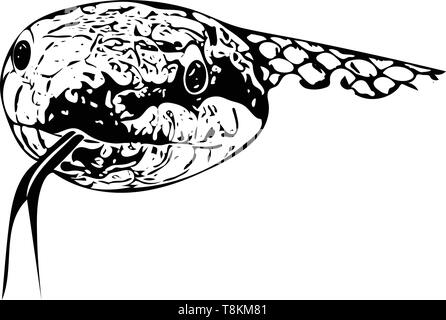 Computer drawn monochrome illustration of the head of a snake head-on with outstretched tongue on white. - Stock Image