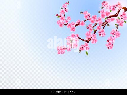 Sakura. Branches with pink flowers, leaves and cherry buds. On a transparent background. illustration - Stock Image