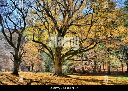 Forest landscape in autumn, Provence, France - Stock Image