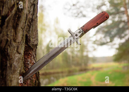 Hunting knife in the bark of a tree - Stock Image