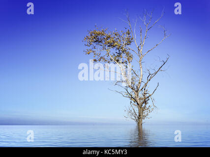 Single dead tree submerged by flood water with a reflection in the surface with a blue summer sky - Stock Image
