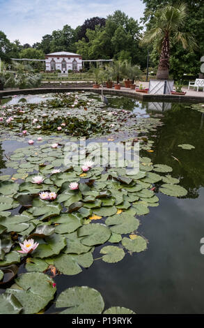 Palmengarten lily pond, a botanical garden in the Westend Sud district of Frankfurt am Main, Hesse, Germany.lily pond - Stock Image