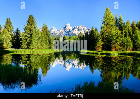 The Grand Tetons reflect in a pond at Schwabacher Landing in Grand Teton National Park near Jackson Hole, Wyoming USA - Stock Image
