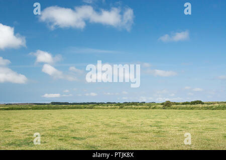 Cropped agricultural field (pasture) with blue summer sky. - Stock Image