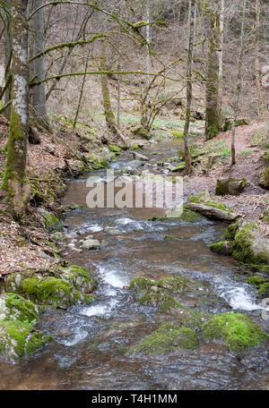 Woodland stream, in early spring, Wutachschlucht Gorge, Black Forest, Germany, Black Forest, Germany - Stock Image