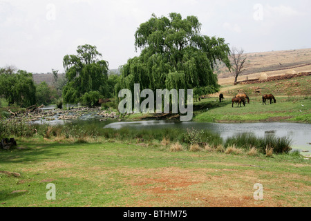 The River Running by the Botshabelo Historical Village, South Africa. - Stock Image