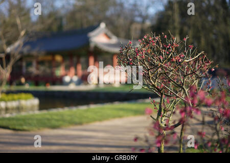 Close-Up Of Plants On Sunny Day - Stock Image