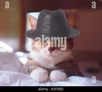 The cat with a hat - Stock Image